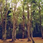 Les Pouilles-Foresta Umbra