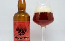 Tricerat'hops Mandarina Bavaria – Brasserie Tri Martolod
